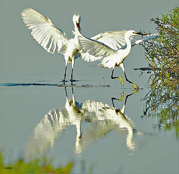 Angry Egrets by John R Williams