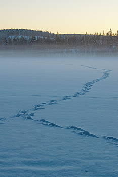 Animal tracks in the snow covering a frozen lake by Intensivelight