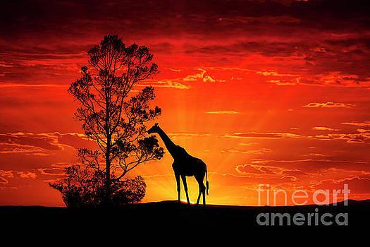 Animals 95 by Ben Yassa