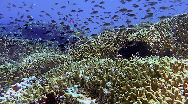 Another beautiful Tubbataha reef by Paul Ranky