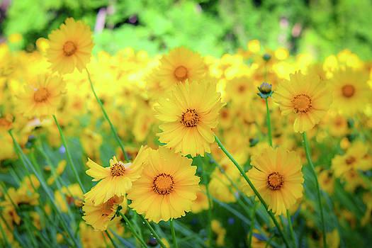 Another Glimpse, Pollinator Field by Cindy Lark Hartman