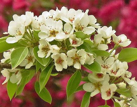 Apple Blossom Bouquet  by Lori Frisch