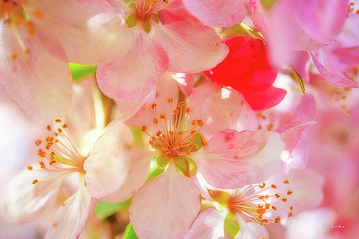 Apple Blossoms Textures by Leland D Howard