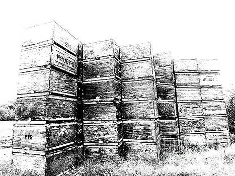 Sharon Williams Eng - Apple Crates Sketch 300