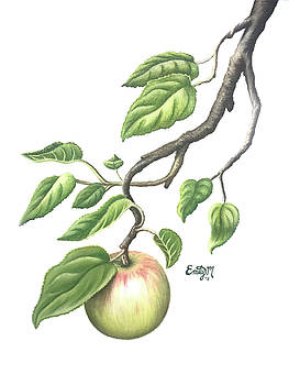 Apple of my Heart by Emily MacDonald