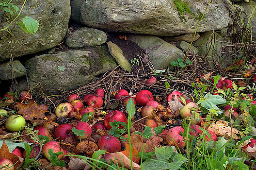 Apples And The Stone Wall by Jeffrey PERKINS
