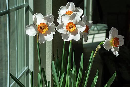 April Blooms by John Bartelt