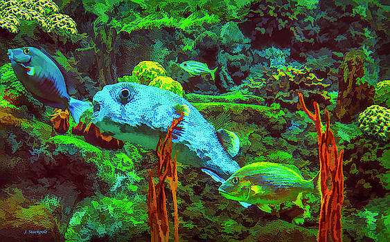 Aquarium Art by Jennifer Stackpole