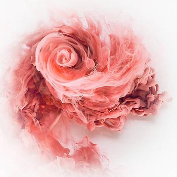 David Thompson - Aqueous Bloom 3 - Rose Madder