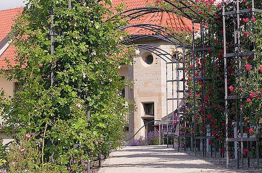 Archway Through Rose Garden  3 by Jenny Rainbow