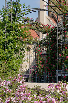 Archway Through Rose Garden 4 by Jenny Rainbow