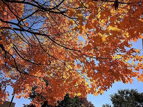 Arkansas Autumn by Julie Harrington
