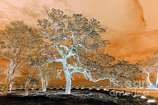 Armageddon Landscape by Norman Gabitzsch