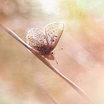 Around The Meadow 5 by Jaroslav Buna