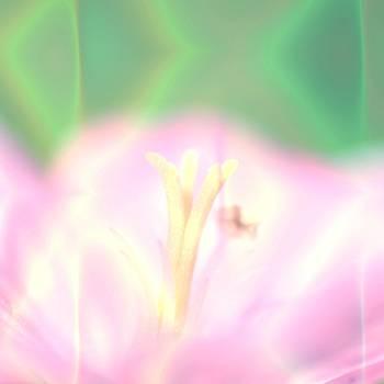 Art blooming flower background by Roman Aj
