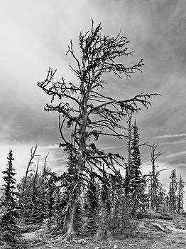 As Old As The Hills Black and White by Allan Van Gasbeck