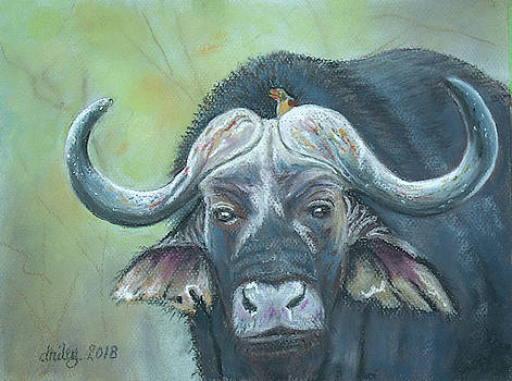 Asian Buffalo by Dorothy Riley