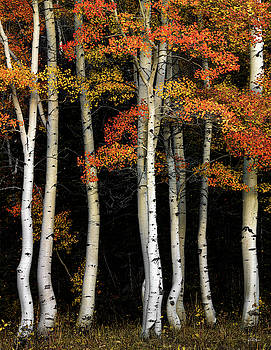 Aspen Contrast by Leland D Howard