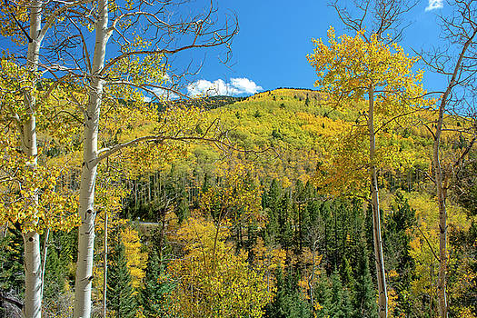 Aspen Glory by Kirk Sewell
