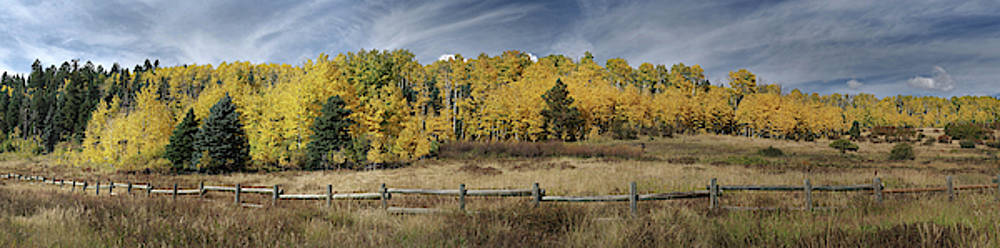Aspen in the fall by Mark Langford