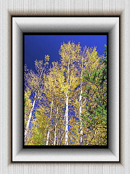 Aspens and Blue Sky by Richard Risely