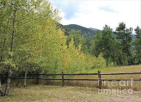 Aspens in the Mountains by Tammie J Jordan