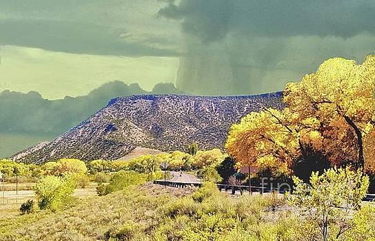 Aspens near Durango Colorado by Janette Boyd