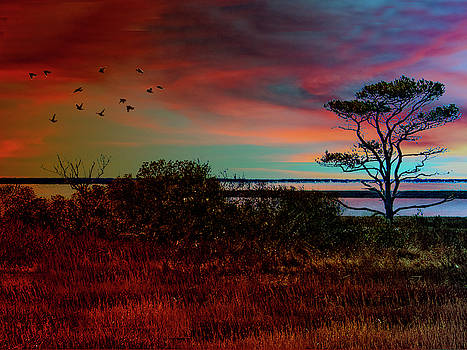 Assateague Island by Paul Wear