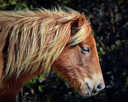 Assateague Pony Sarah's Sweet Tea Profile by Bill Swartwout Fine Art Photography