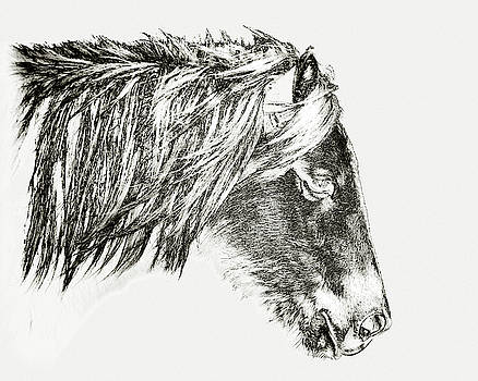 Assateague Pony Sarah's Sweet Tea Sketch by Bill Swartwout Fine Art Photography