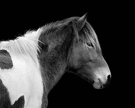 Assateague Pony Susi Sole Black and White Portrait by Bill Swartwout Fine Art Photography