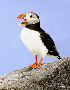Atlantic Puffin by Nelson Hammer