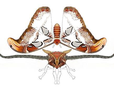 Atlas Moth2 by Joan Stratton