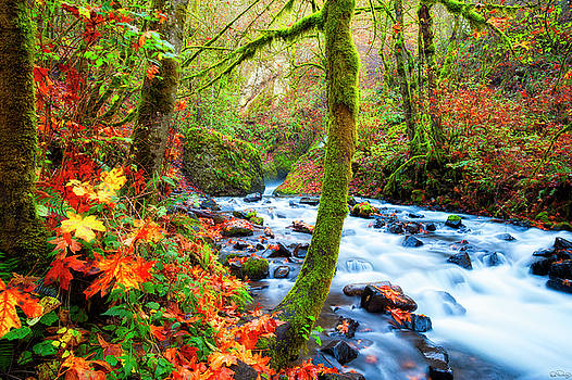 Autumn Along Bridal Veil Creek Columbia River Gorge by Dee Browning