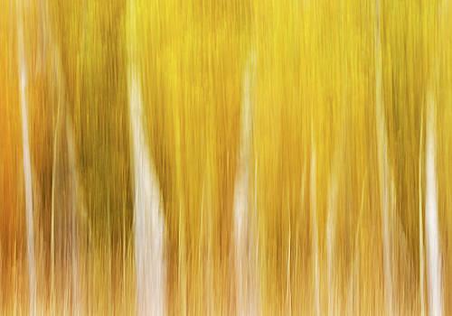 Max Waugh - Autumn Aspen Blur