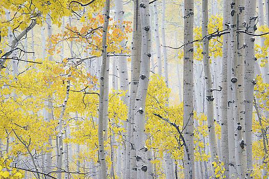 Autumn Aspens 2 by Leland D Howard