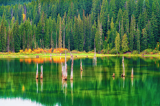 Autumn at Goose Lake Gifford Pinchot National Forest by Dee Browning