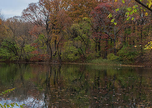 Autumn at Prospect Park by Traci Asaurus