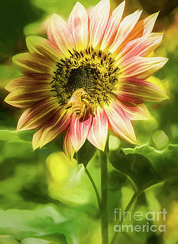 Autumn Beauty Sunflower and Bee by Mellissa Ray