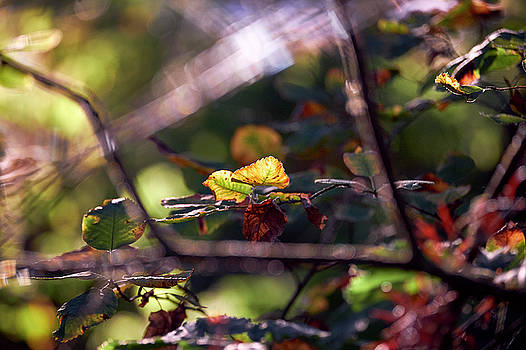 Autumn Beginnings by Whitney Goodey