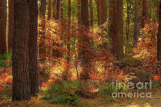 Autumn Bliss by Sharon Mayhak