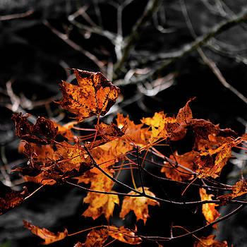 Autumn Brown by Christine Buckley
