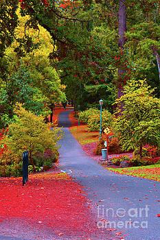 Autumn colors at Bush Pasture Park by Ellie Asha Photography