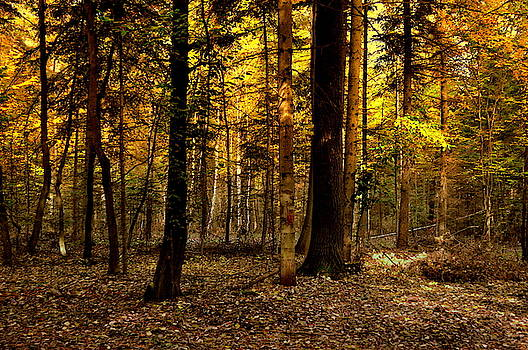 Henryk Gorecki - Autumn colors