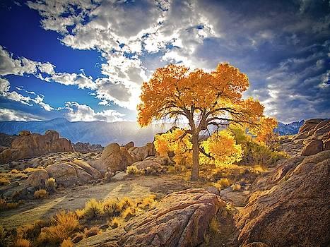 Autumn Desert by Martin Gollery