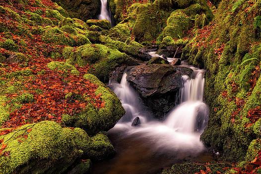 Autumn Falls by Elliott Coleman