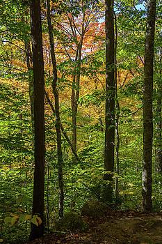 Cliff Wassmann - Autumn Foliage II