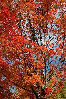 Cliff Wassmann - Autumn Foliage III