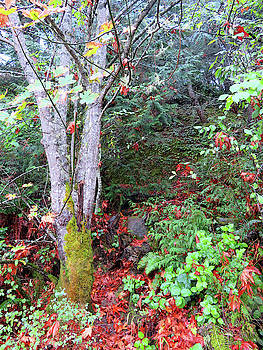 Autumn Forest by Marie Jamieson