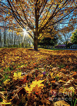 Autumn Gold by Eric J Carter